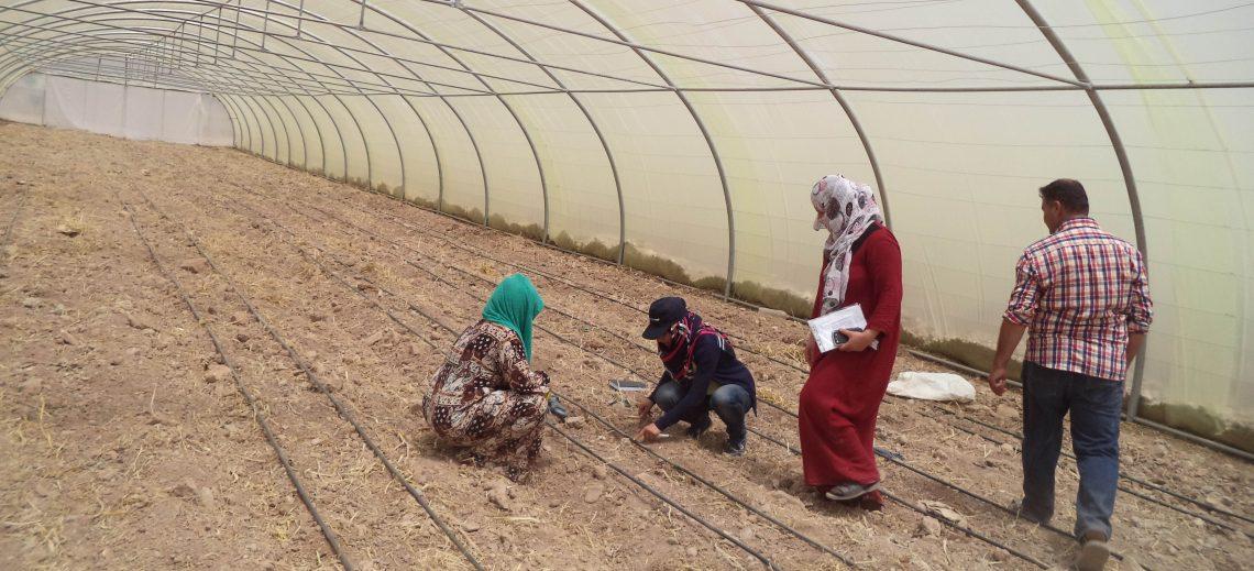 Kleinbauern und Flüchtlinge kurbeln die Landwirtschaft an